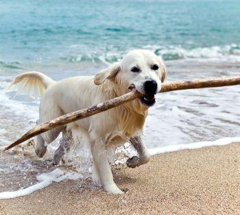 Urlaub auf Rügen mit dem Hund