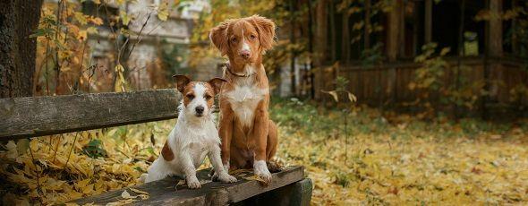 ferienwohnung südschwarzwald mit hund